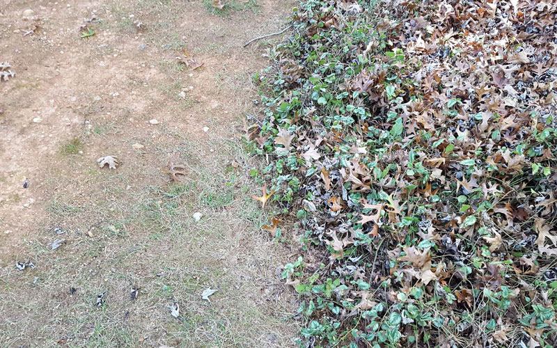 Yard Force Blower ground cover