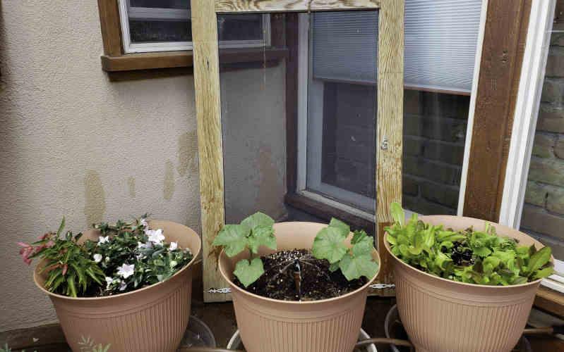 daisy rain sprinkler pots happy and healthy plants
