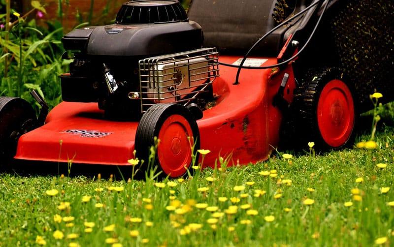lawn mower flowers