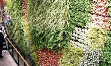Benefits of Living Walls