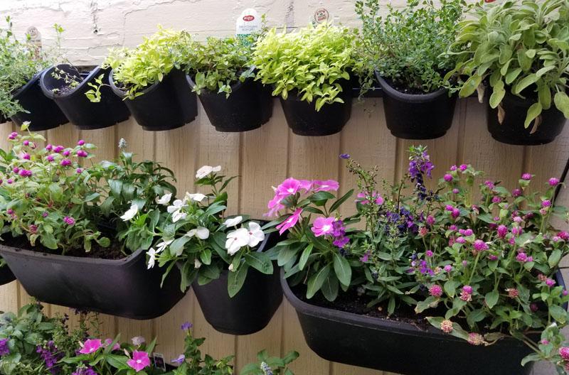watex green wall hanging pots