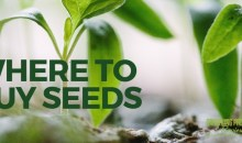 Where to Buy Seeds
