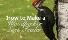 How to Make a Woodpecker Suet Feeder