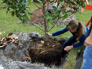 Image result for gardener tree