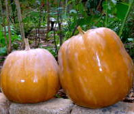 Seminole pumpkins by Miranda Castro