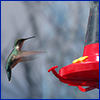Hummingbird approaching feeder photo by Annkatrin Rose