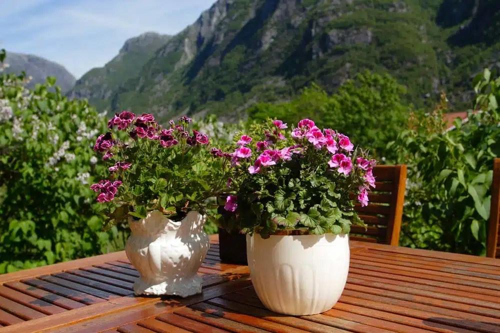 creative patio planter ideas