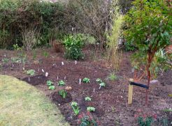 More perennials are planted, many of which I got from Beth Chatto's nursery in Essex.