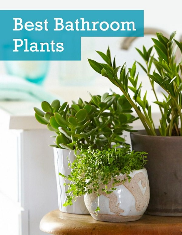 Indoor Plant Maintenance
