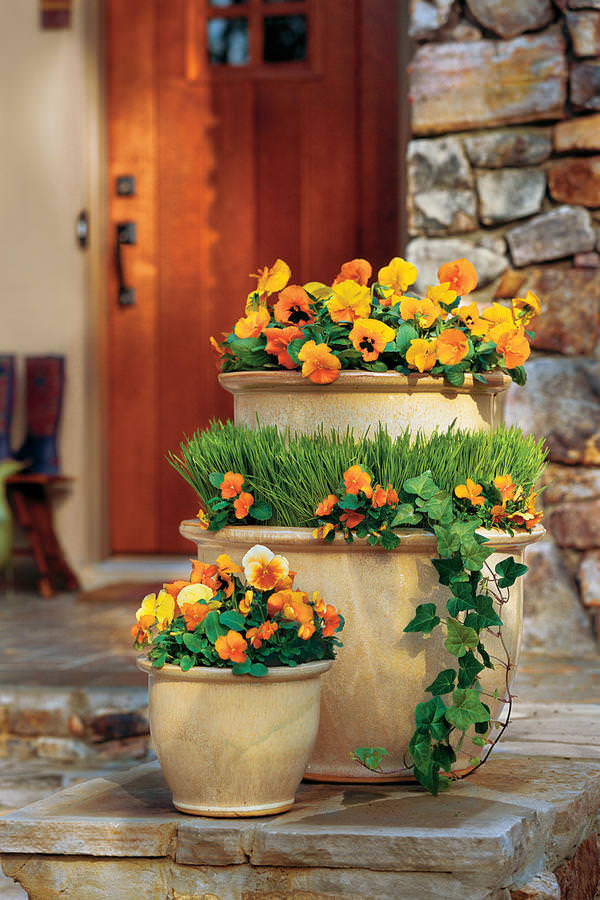 Front Door Container Gardens That Will Impress Guests ... on Tree Planting Ideas For Backyard id=52126