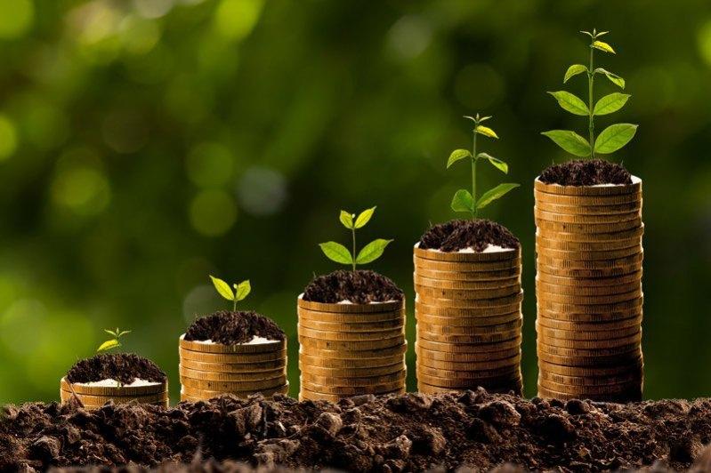 benefit of money plant