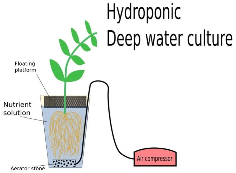 deep water culture