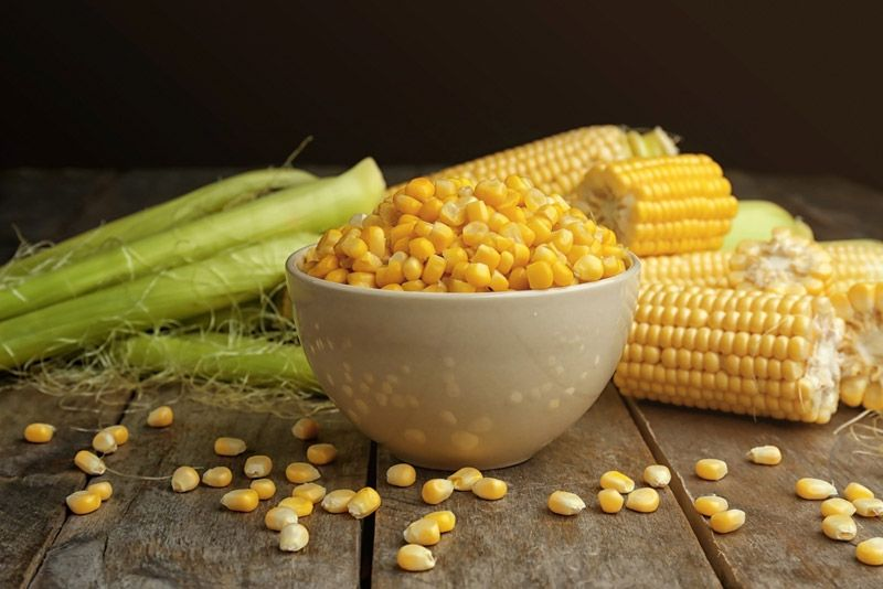 How to store freshly picked corn