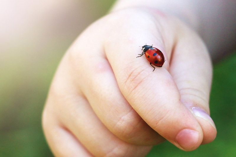 Child hand finger with lady bug crawling on it