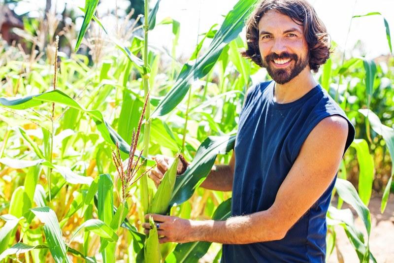 Timing the harvesting corn