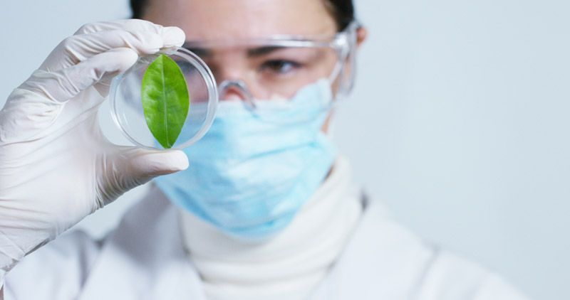 analyzes the soil and the plants
