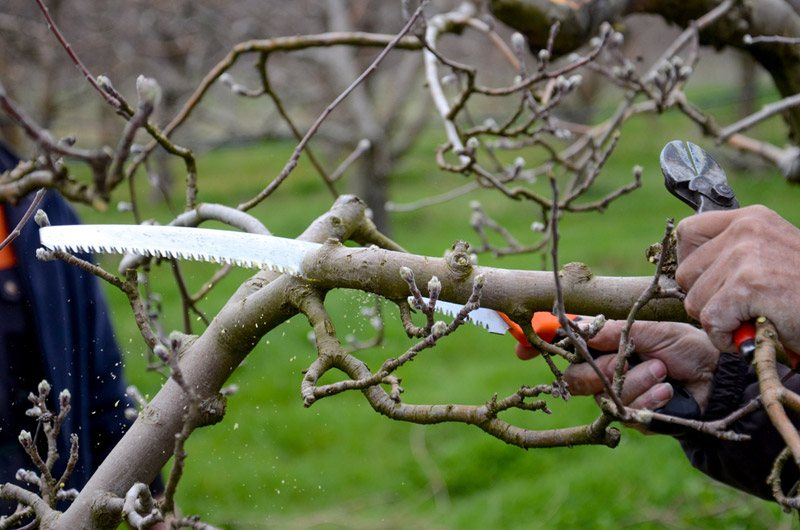 Types of Pruning Saws