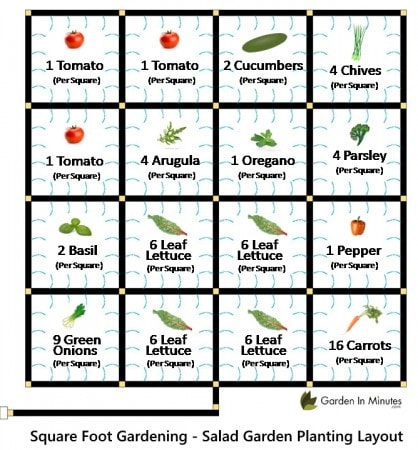 salad garden layout planting guide
