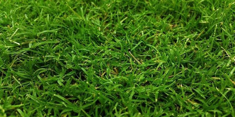 Why Should You Aerate Your Lawn?
