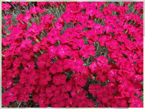 red_plants_1