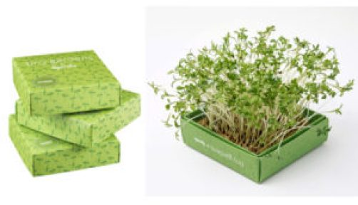 tiny-gardens-microgreens-sprouts-gardenista
