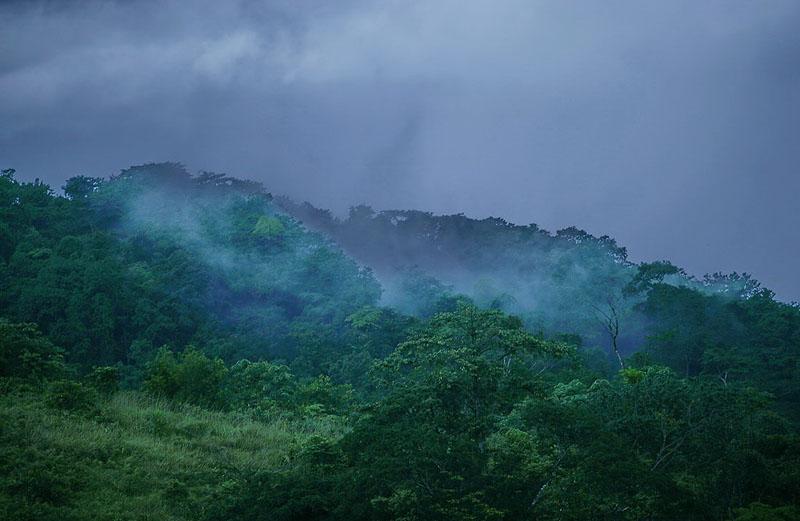 Тропические горные леса. Африка. Сезон дождей.