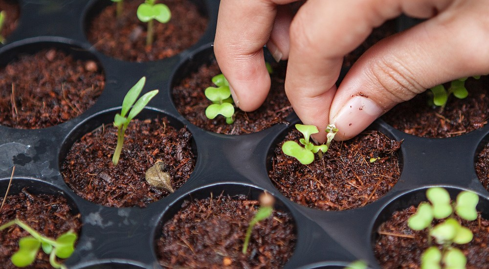 How to Start Plants from Seeds