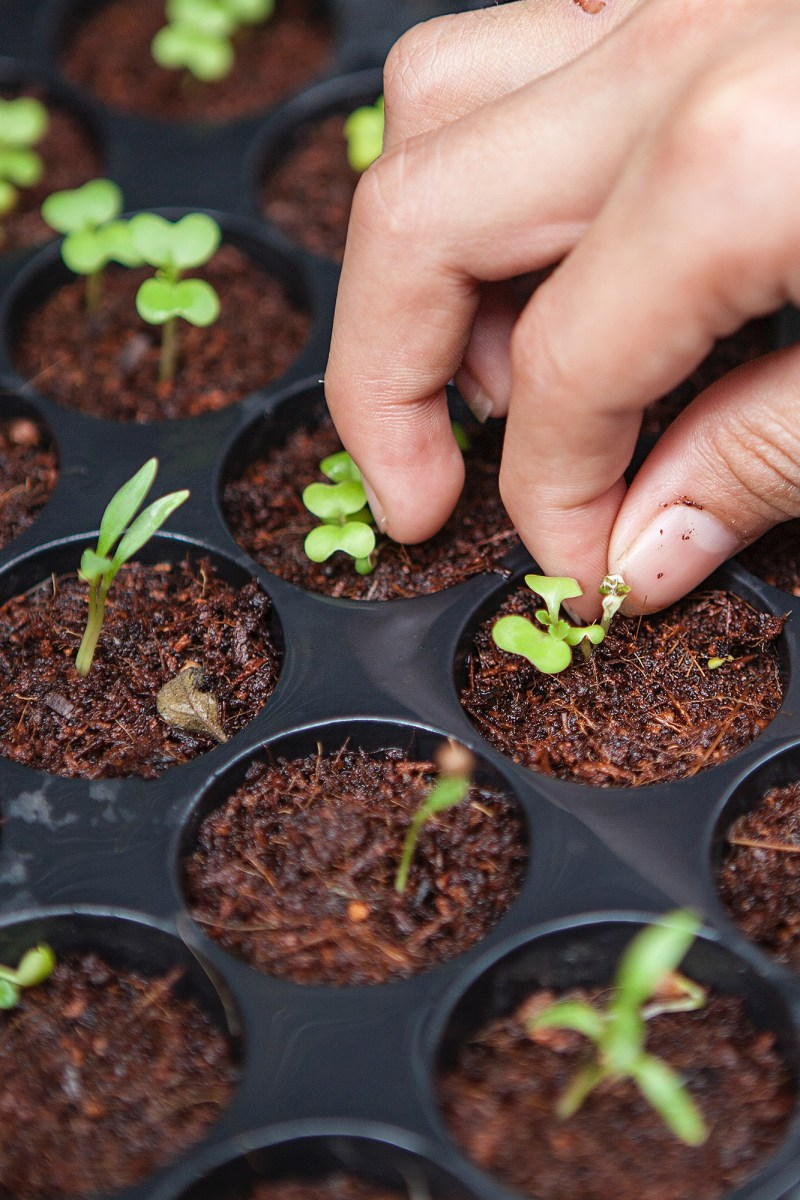 How to Start Plants from Seed