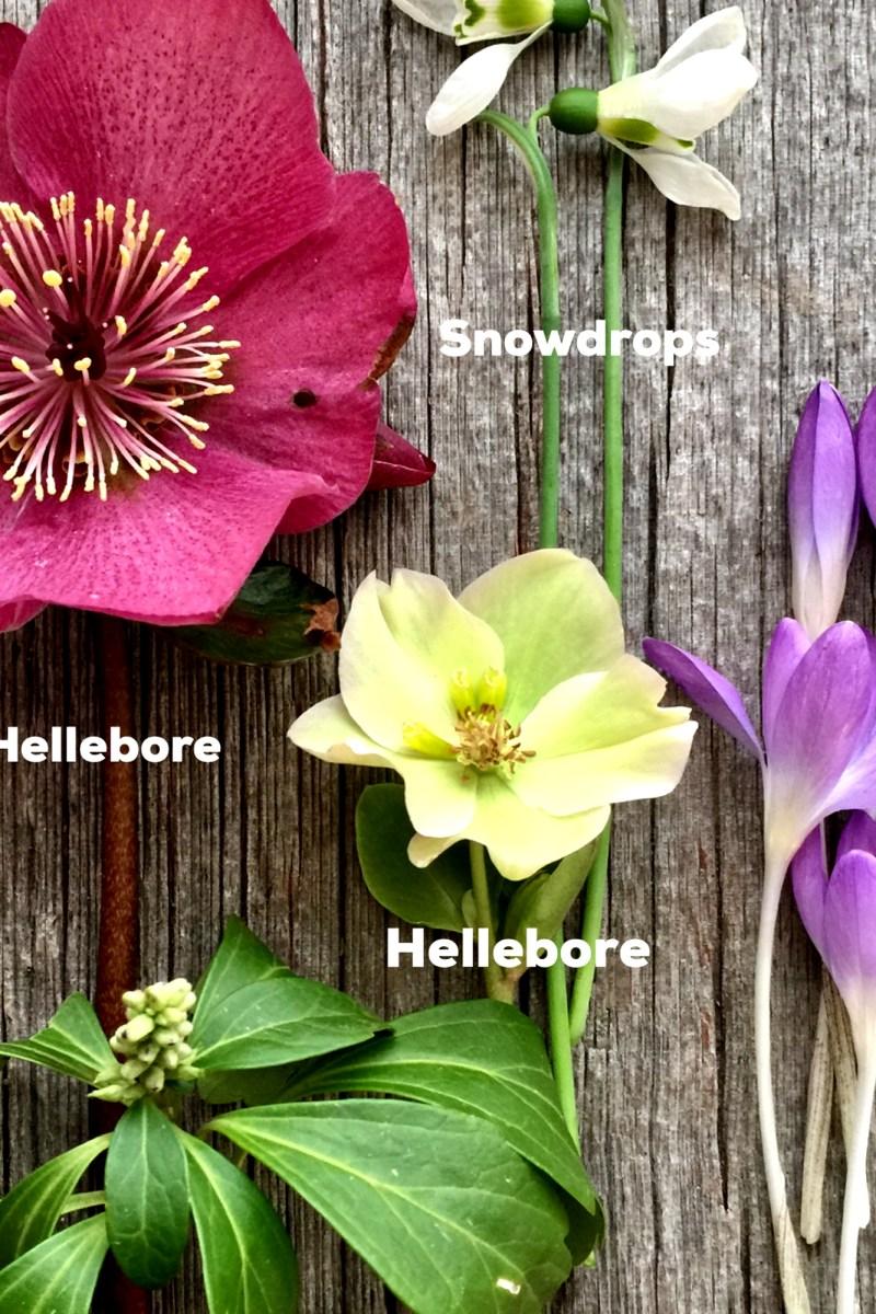 The April Garden To-Do List