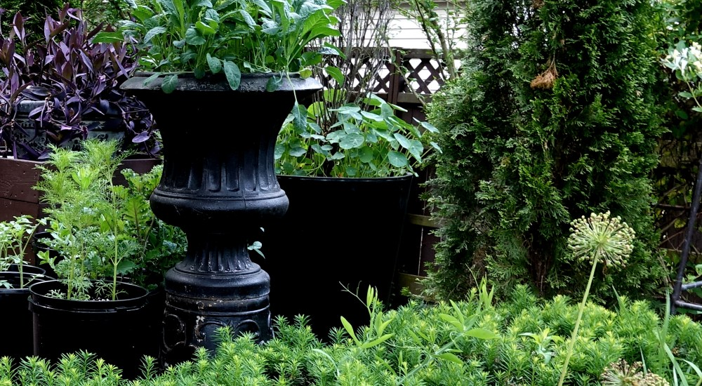 How to Plant Containers Without Going to the Garden Center
