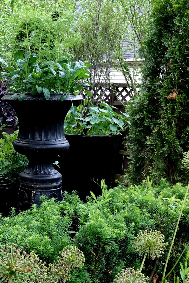 Plant Containers Without Going to the Garden Center