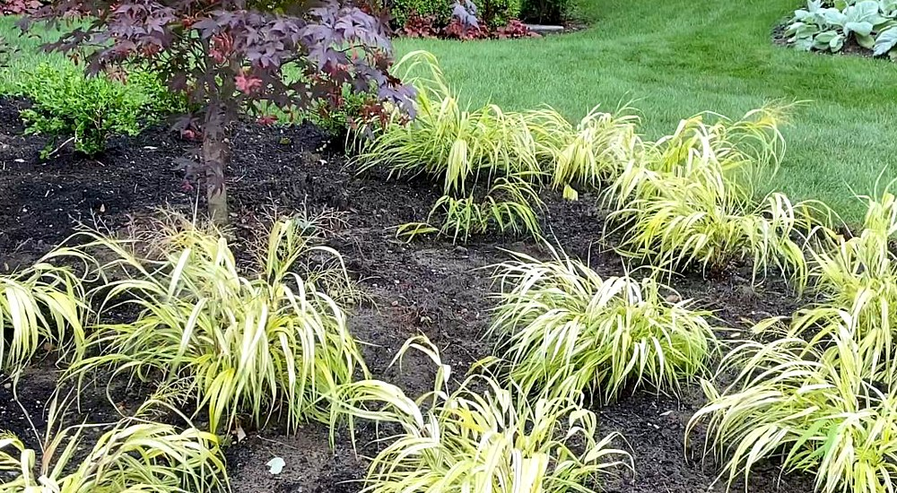 Installing Plants In The Island Border