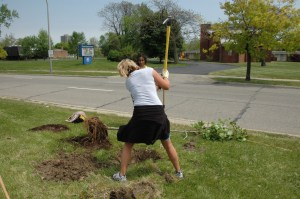 Can you dig it? My former research technician Dana Ellison installs a tree in Detroit.