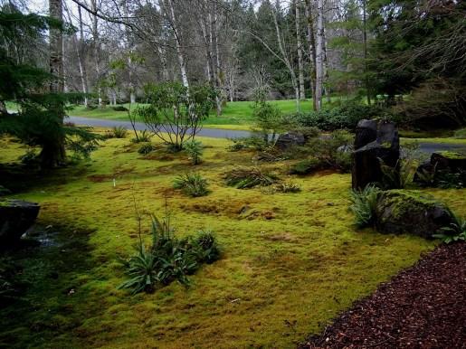 Bloedel Reserve moss garden