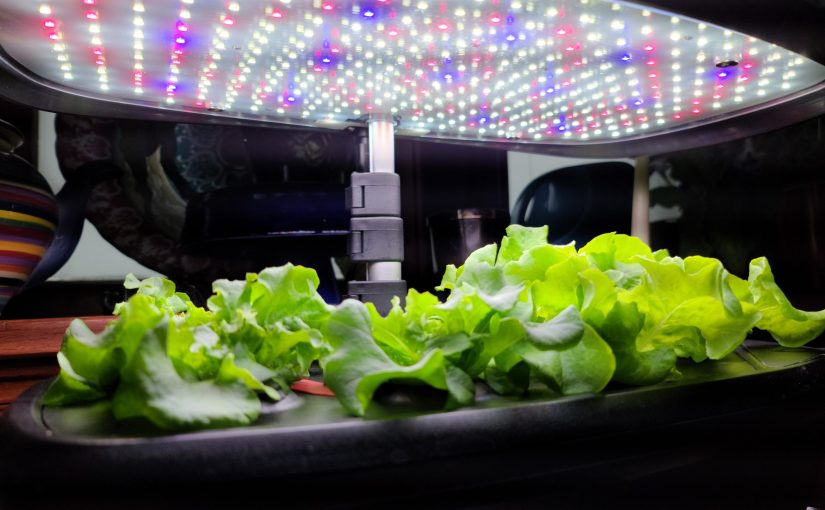 Hydroponics for the Holidays?  Home Systems are a hot holiday gift list item