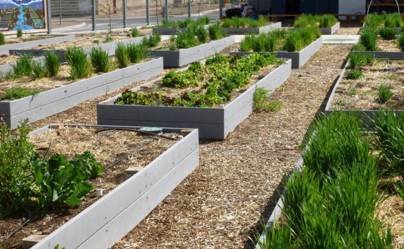 A Raised Bed Rebuttal: In defense of a common garden practice and soil health