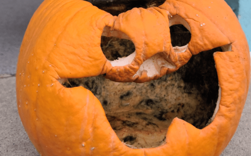 Smashing Pumpkin Myths: Bleaching to extend shelf (and porch) life