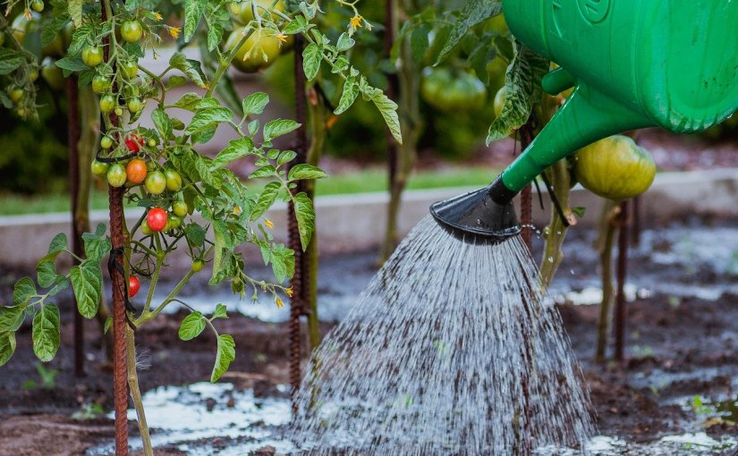 Water: Garden Friend….and Foe?  – Water, Relative Humidity, and Plant Diseases