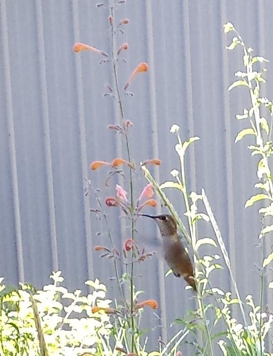 BirdCare3