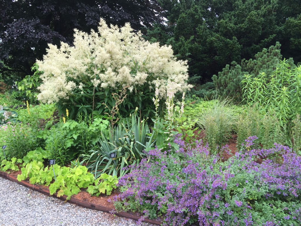 Here some naturalistic plantings at the Berkshire Botanical Gardens, a lovely site we happened upon on the way to Connecticut. It's the less famous sites that tend to have great practices.
