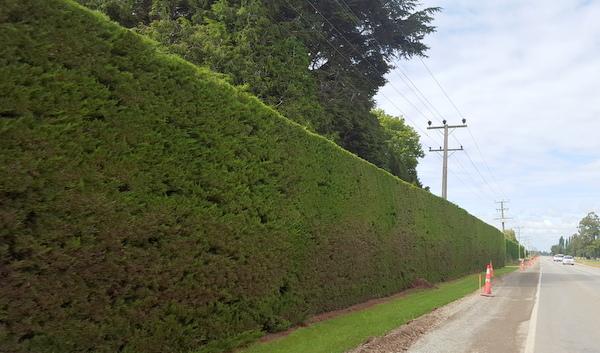 Hedge-001
