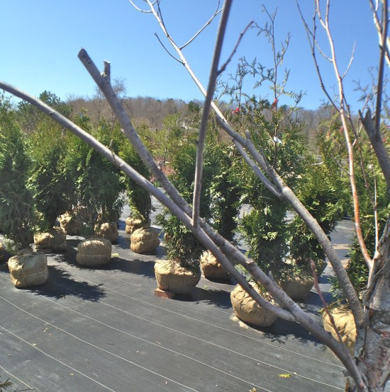 Plant Shopping 2