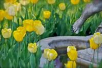 Tulip Toes