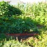 Planting Garden 2013