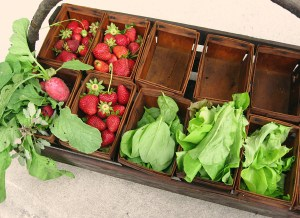 basket of radishes, lettuce and spinach