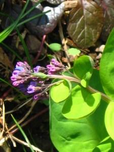flower buds extending