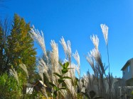 grasses glowing
