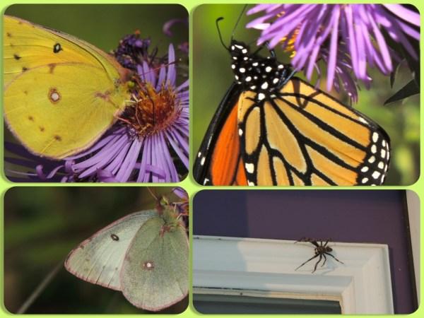 oct butterflies