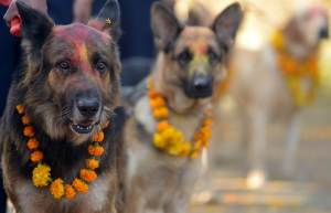 Nepalese police dog unit