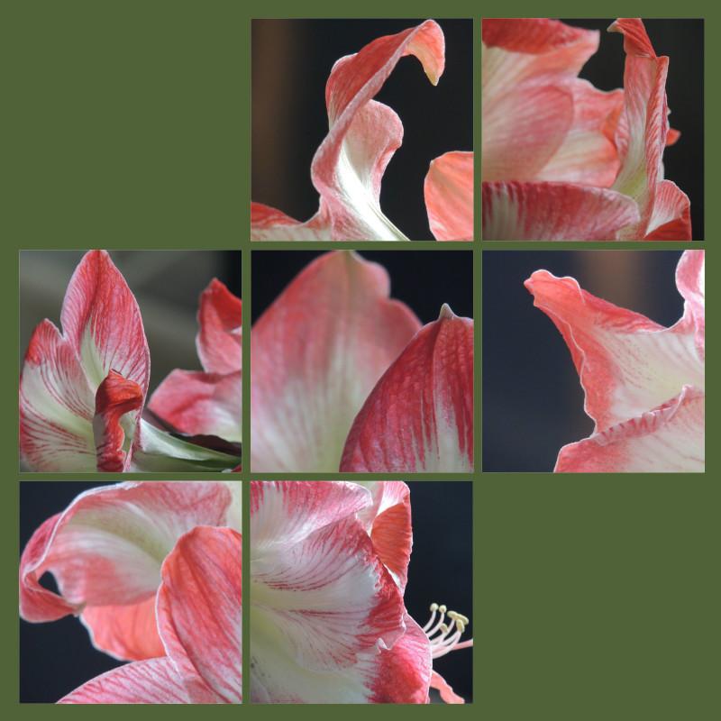 Flower Tales-Nasturtiums